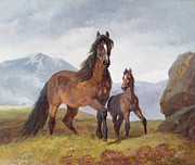 Foal Metal Prints - A Welsh Mountain Mare and Foal Metal Print by John Frederick Herring Snr