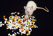 Healthcare And Medicine Art - A White Mouse Standing Near A Pile by Michael Melford
