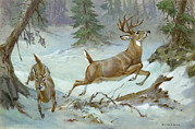 Two Tailed Photo Metal Prints - A White Tail Buck And Doe Flee Metal Print by Walter A. Weber