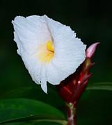 JISS JOSEPH - a wild flower