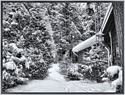 Blizzard Scenes Posters - A Winter Path in the Woods - A Secluded Country Cottage in the Forest after a Canadian Snowstorm Poster by Chantal PhotoPix