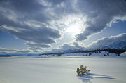 Evergreen Covered In Snow Posters - A Winter Sky Poster by Idaho Scenic Images Linda Lantzy
