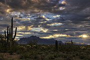 The Supes Prints - A Winter Sunrise in the Desert  Print by Saija  Lehtonen