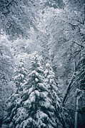 Snow Scenes Prints - A Winter Wonderland In A Snowy Forest Print by Marc Moritsch