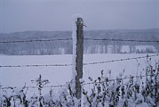 Snow Scenes Metal Prints - A Wire Fence Cordons Off A Snow-covered Metal Print by Roy Gumpel