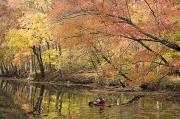 Fall Colors Art - A Woman Kayaking Down The Chesapeake by Skip Brown