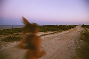 Dirt Roads Metal Prints - A Woman Runs Down A Dirt Road In Baja Metal Print by Jimmy Chin