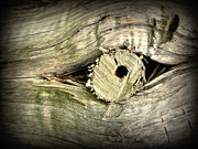 Black Ring Digital Art - A Wooden Eye by Cindy Wright