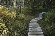 Prince Albert National Park Photos - A Wooden Staircase Winds by Raymond Gehman