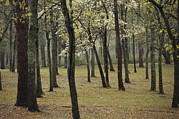 Spring Views Posters - A Woodland View With New Spring Foliage Poster by Raymond Gehman