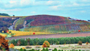 Wine Vineyard Photos - A Yamhill Co. Vineyard by Margaret Hood