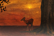 Golden Sky Framed Prints - A Young Deer Framed Print by Thomas York