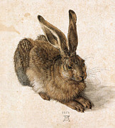 1502 Posters - A Young Hare Poster by Pg Reproductions