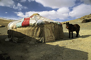 Mammals Prints - A Yurt With A Colorful Roof In Bayan Print by Ed George