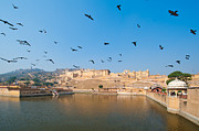 Flock Of Bird Art - Aamer Fort by Nipun Srivastava. Travel Photographer, writer, motorcycle ma