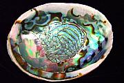 Abalone Seashell Photos - Abalone Seashell by Mary Deal