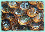 Abalone Seashell Photos - Abalones by Judi Bagwell