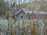 Cornfield Photos - Abandoned Farmhouse and Cornfield by Douglas Barnett