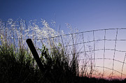 Protection Posters - Abandoned Fence At Sunset Poster by Thomas David Photography