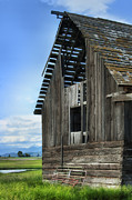 Rundown Barn Posters - Abandoned Montana Barn Poster by Sandra Bronstein