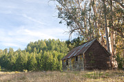 Ruin Photo Prints - Abandoned rustic cabin Print by Matt Tilghman