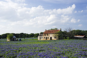 Abandoned Houses Posters - Abandoned Stone Cottage in Field of Bluebonnets Poster by Jeremy Woodhouse