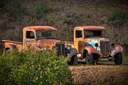 Old Pickup Photos - Abandoned Trucks by Connie Cooper-Edwards