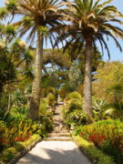 Isles Photos - Abbey Gardens of Tresco on the Isles of Scilly by Alex Cassels