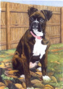 Boxer Dog Drawings Framed Prints - Abbi Framed Print by Karolann Hoeltzle