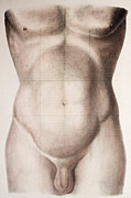 Labelled Prints - Abdominal Regions Print by Mehau Kulyk