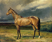 Equine Framed Prints - Abdul Medschid the chestnut arab horse Framed Print by Carl Constantin Steffeck