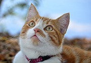Staring Cat Photos - Above by Fraida Gutovich