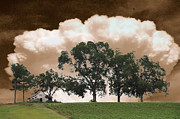 Country Scenes Metal Prints - Above The Cotton Fields Metal Print by Jan Amiss Photography