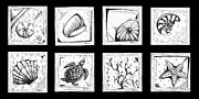 Tropical Fish Drawings Posters - Abstract Art Contemporary Coastal Sea Shell Sketch Collection by MADART Poster by Megan Duncanson