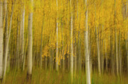 Pinks Posters - Abstract Aspens Poster by Carolyn Dalessandro