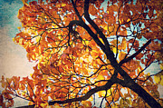 Sunlight Mixed Media Posters - Abstract Autumn Impression Poster by Angela Doelling AD DESIGN Photo and PhotoArt
