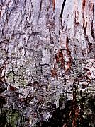 Anna Villarreal Garbis Framed Prints - Abstract Bark 9 Framed Print by Anna Villarreal Garbis