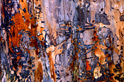 Colourful Bark Prints - Abstract by Nature Print by Anca Jugarean