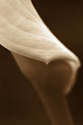 Umber Metal Prints - Abstract Calla Lily Flower Sepia Metal Print by Jennie Marie Schell
