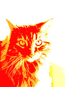 Photo Of Cat Framed Prints - Abstract Cat Red and Yellow Framed Print by Ann Powell