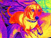 Imaginative Photos - Abstract Dachshund by Cindy Gacha