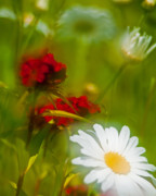 Mothers Day Prints - Abstract Daisys and Geranium Print by Thomas Schoeller