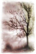 Abstract Fall Trees Print by David Ridley