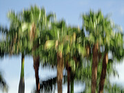 Fotografie Prints - Abstract Florida Royal Palm Trees Print by Juergen Roth
