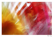 Xoanxo Cespon Framed Prints - Abstract Flower Arrangement 2 Framed Print by Xoanxo Cespon