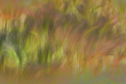 Ron Hoggard - Abstract Grasses