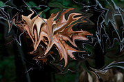 Free Form Photos - Abstract Leaf 2 by Robert Sander