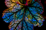 Stained Glass 3 Framed Prints - Abstract Leaf Framed Print by Mitch Shindelbower