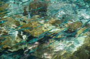 Abstract Of The Underwater World. Production By Nature Print by Jenny Rainbow
