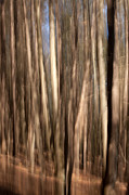 Tall Trees Photos - Abstract of Tree by Karol  Livote
